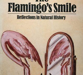 Flamingo's Smile